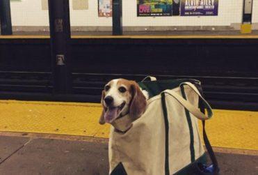 """Metro de Nueva York solo deja entrar a perros que """"quepan en una bolsa"""": así responden los usuarios"""