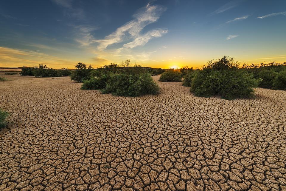 """""""Plantas podrían sobrevivir el doble de tiempo a las sequías"""""""