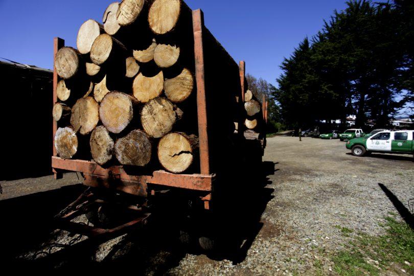 Investigan pagos a carabineros para proteger camiones en Arauco