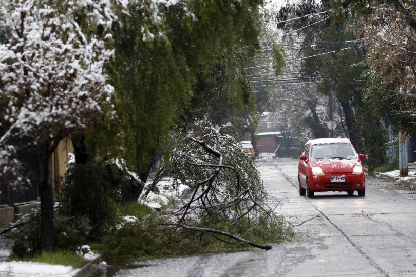 FOTOS | La otra cara de la nevazón en Santiago: 300 árboles caídos, caminos cortados y cortes de luz