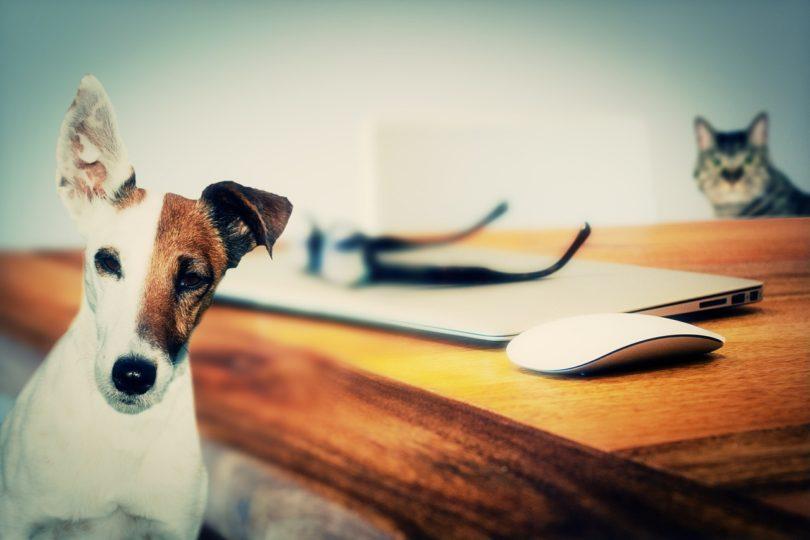 VIDEO | La conducta de hablar con animales o plantas es señal de inteligencia
