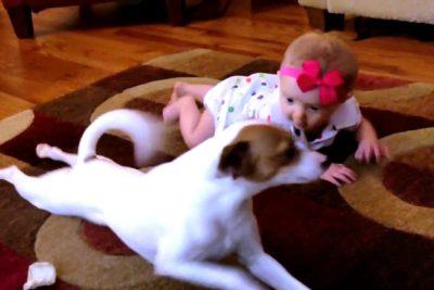 VIDEO   Perro le enseña a gatear a su pequeña dueña