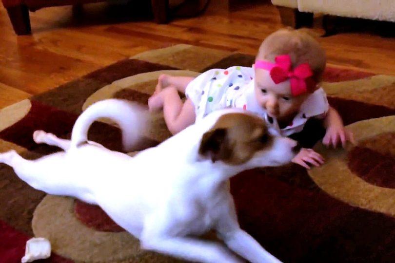 VIDEO | Perro le enseña a gatear a su pequeña dueña