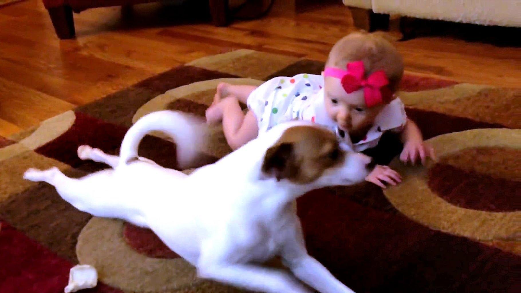 """""""VIDEO   Perro le enseña a gatear a su pequeña dueña"""""""
