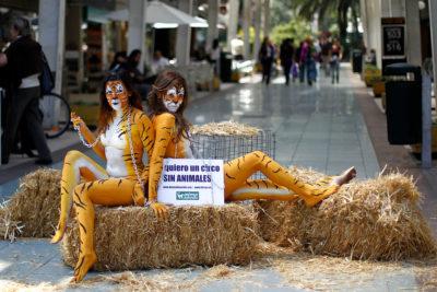 Senado rechazó norma que prohibía la presencia de animales en los circos