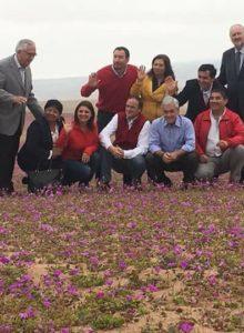 FOTOS  Piñera contraviene la norma y pisa flores del Desierto Florido en actividad de campaña