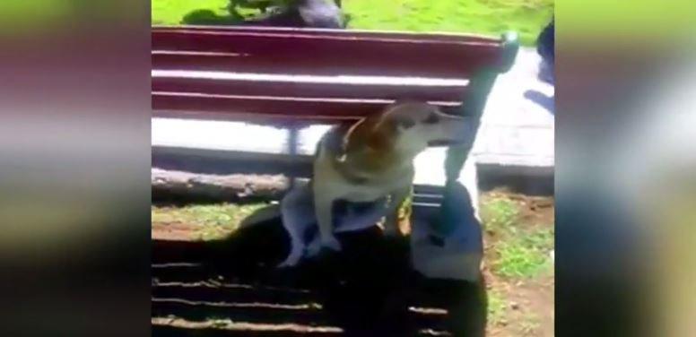 Falleció perro baleado por carabinero en Plaza de Armas de Vallenar