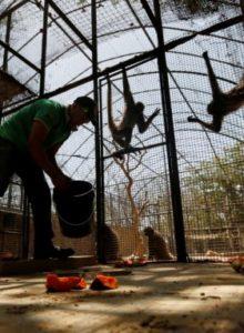 Denuncian robo de animales en zoo de Venezuela para consumo humano