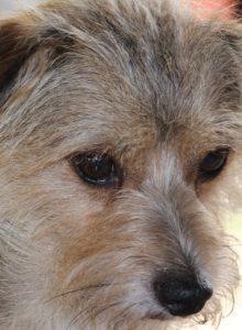 Jornada de adopción busca darle un hogar a más de una decena de perros