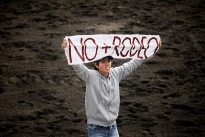 """Presidente de Federación de Rodeo tras luz verde de Lo Barnechea: """"Los animales no sufren daño"""""""