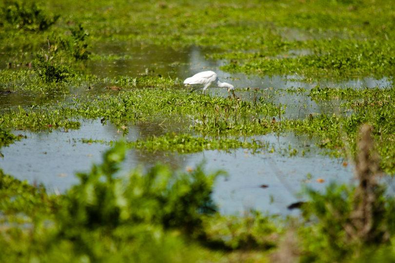 Proyecto de ley para proteger los humedales inicia su tramitación en comisión de medio ambiente