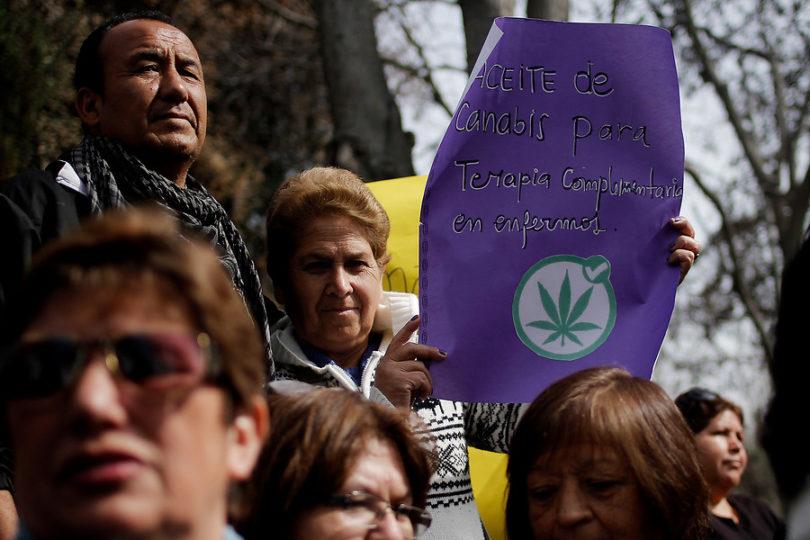 """Científicos piden """"precio justo y accesible"""" para la marihuana medicinal en Chile"""