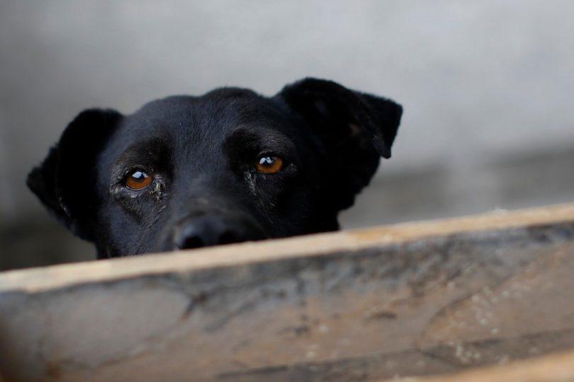 Rescatan a 15 perros abandonados en un departamento de Providencia