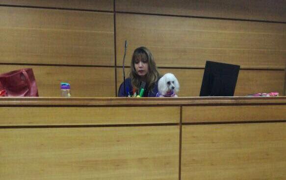 Poder Judicial cuestiona a jueza que lideró audiencia acompañada de su poodle