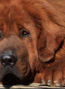Justicia de EE.UU. ordena cortar cuerdas vocales a perros por ladrar mucho