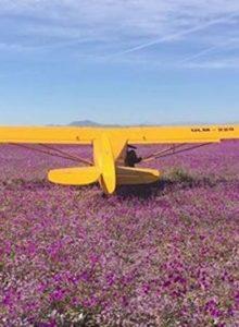 VIDEO | Más de 10 avionetas aterrizaron sobre el Desierto Florido para hacer un picnic