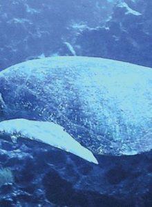 FOTOS | ONG denuncia con dramáticas imágenes la decapitación de tortugas en zona protegida de Arica