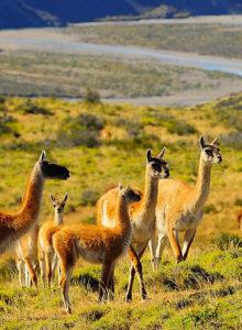 Diez claves ambientales del PNUD a los candidatos para un Chile Sostenible e Inclusivo