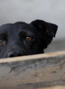 Minsal retrocede en propuesta que prohibía dar agua y comida a animales de la calle