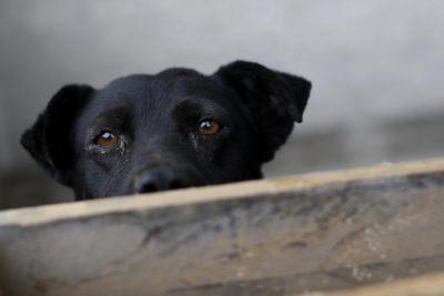 Perros rescatados en Providencia presentan lesiones atribuibles a agresiones sexuales