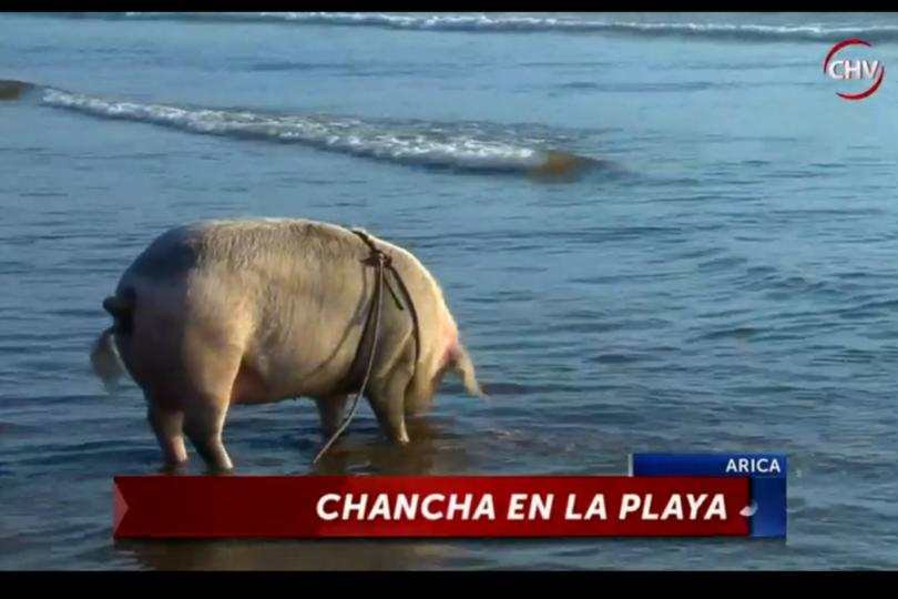 """El 70% de Chile cree que los canales """"no muestran"""" algunas noticias y que """"se aprovechan del dolor"""""""
