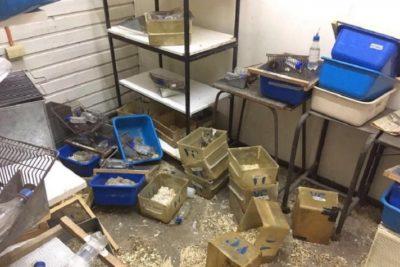 Acción libertaria animalista en Universidad de Chile termina de la peor manera