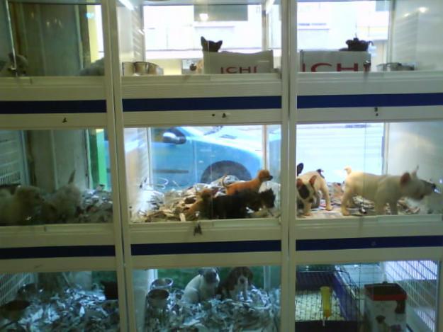 Tiendas de mascotas en California ya no podrán vender animales que no provengan de refugios o rescates