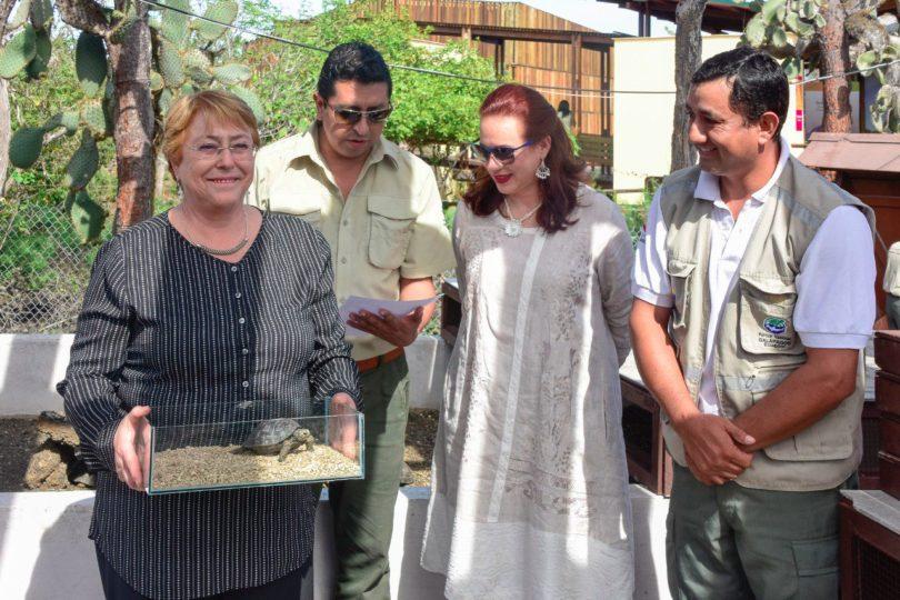 """Bachelet se convierte en madrina de tortuga gigante en Galápagos y la bautiza """"Violeta"""""""