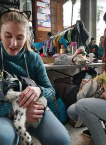 Minsal elimina polémico artículo que limitaba número de mascotas por metro cuadrado