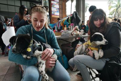 GAM anuncia nueva jornada gratuita de adopción de perros y gatos