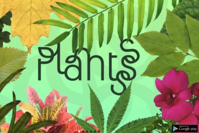 Aplicación chilena Plantsss desembarca en Europa junto al Jardín Botánico de Barcelona