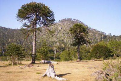 Los beneficios de una Región de Nahuelbuta