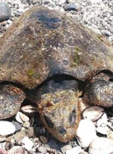 Vecinos denuncian derrame de ácido en Mejillones tras encontrar animales muertos en la costa
