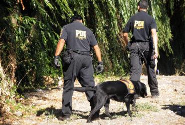 Impacto en Chile Chico: hombre fue devorado por animales