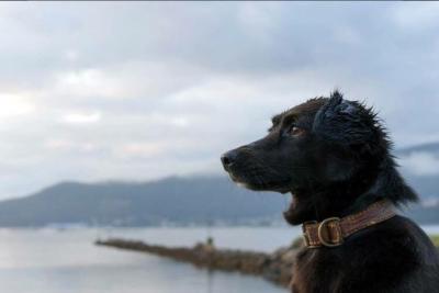 VIDEO | Comando, Floppy y Ramiro: los tres perros que esperan a la única mujer abordo del submarino argentino