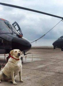 Valentina Gan: la perrita rescatada que se convirtió en cabo primero de la Aviación Naval