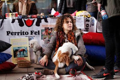 Organizaciones animalistas repudian reglamento del Ministerio de Salud que limita número de mascotas por metro cuadrado