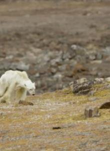 VIDEO | No podrás ver esto sin preocuparte del cambio climático