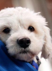 Parlamentarios denuncian matanza de perros callejeros en las sedes del Mundial de Rusia