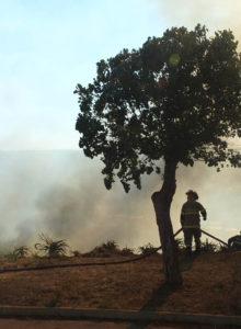 ONG Cultiva lanza campaña para reforestar con especies nativas a un año de incendios forestales