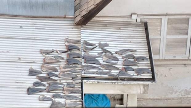 En Chile los tiburones están protegidos por ley