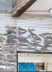 FOTOS | Sernapesca indaga aletas de tiburón en techo de oficina de embajada de Vietnam