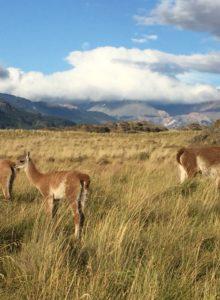 """WWF Chile celebra Parques Patagonia: """"Se hace realidad uno de los últimos grandes lugares protegidos del planeta"""""""