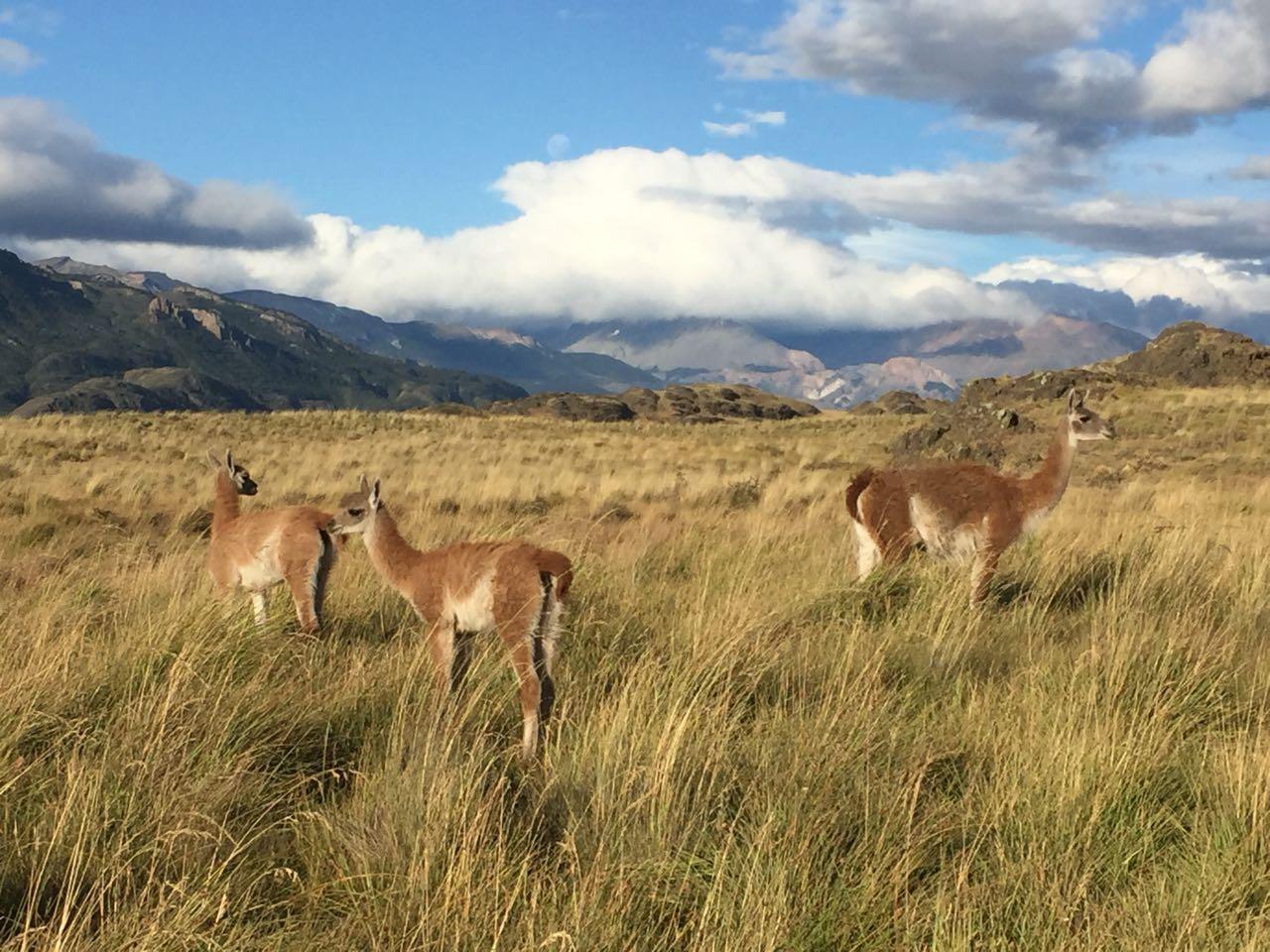 Nueva app permite ver principales puntos turísticos de Chile en 360°