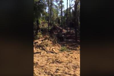 VIDEO  Desastre natural: denuncian destrucción de reconocido sector del Río Trancura en Pucón