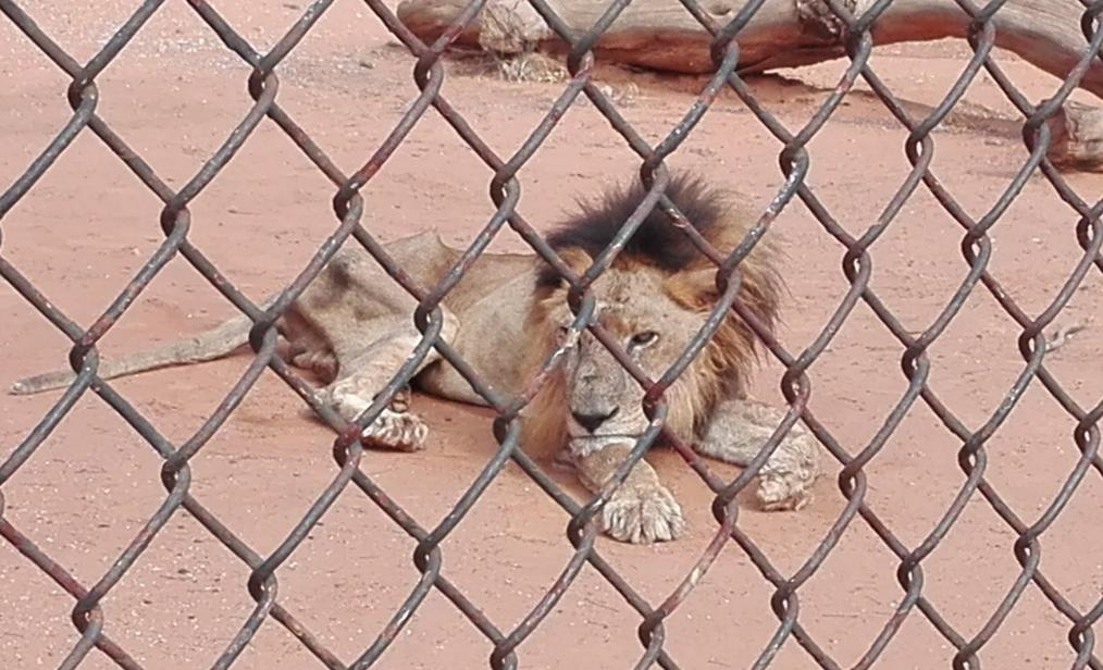 Sacrifican animales para alimentar a otros en el zoológico de Venezuela