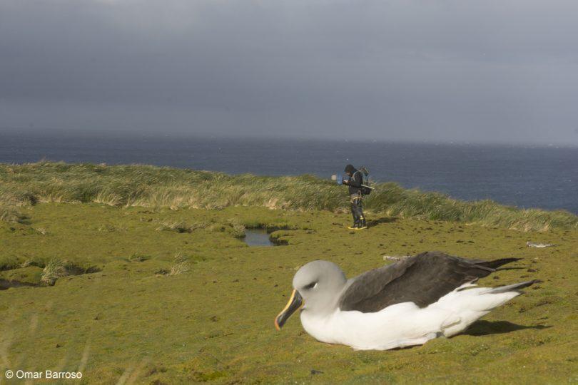 Islas Diego Ramírez–Paso Drake: el nuevo parque marino más austral de América