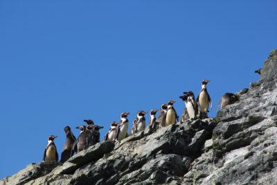 """Archipiélago de Humboldt es declarado """"lugar de esperanza"""" en medio de discusión por minera Dominga"""