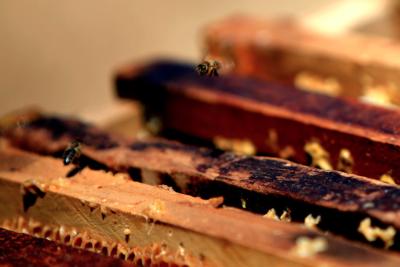 La miel nos protege de las enfermedades de invierno