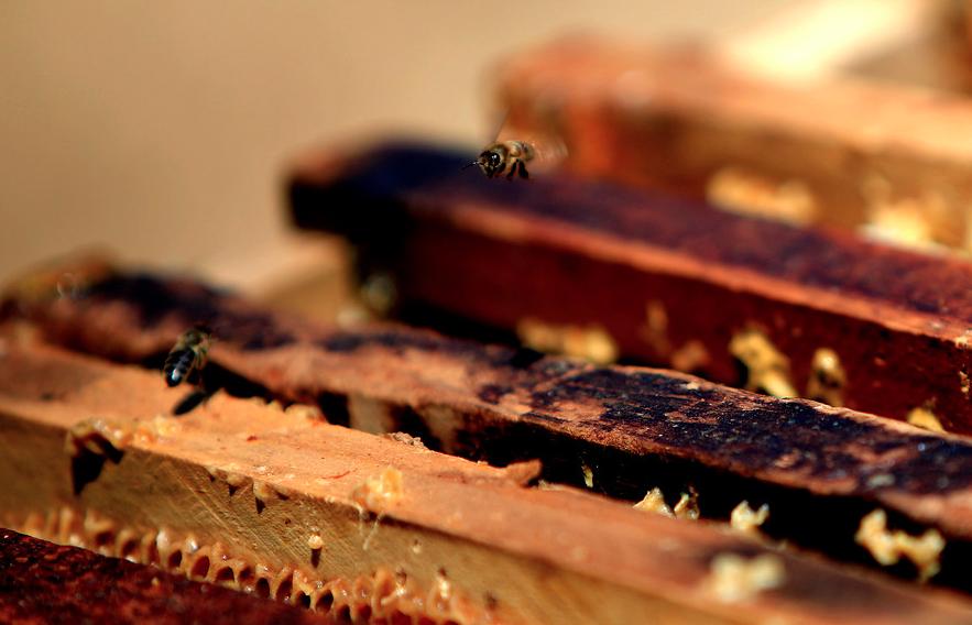 """""""La miel nos protege de las enfermedades de invierno"""""""